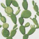 Cactuc cactus 24x24 cm